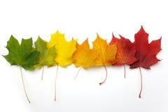 Несколько красочных листьев осени на белой предпосылке стоковое изображение rf