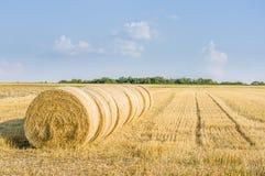 Несколько круглых связок соломы в ряд на поле стерни в солнечности стоковое изображение