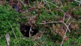 Несколько оос летают в отверстие земли в лесе сток-видео