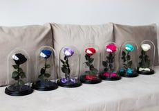 Несколько роз в склянке Продолжительный поднял сохранено стоковые фотографии rf