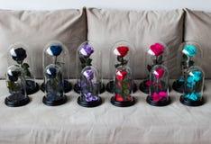 Несколько роз в склянке Продолжительный поднял сохранено стоковое изображение