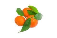 Несколько апельсинов мандарина с хворостинами и листьями на светлом backgrou Стоковая Фотография