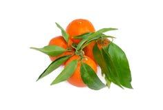 Несколько апельсинов мандарина с хворостинами и листьями на светлом backgrou Стоковое Изображение