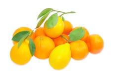 Несколько апельсины, лимоны и апельсинов мандарина на светлом backgro Стоковое Изображение