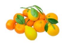 Несколько апельсины, лимоны и апельсинов мандарина на светлом backgrou Стоковые Фото