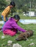 Несколько девушки с поросенком вне рынка Otavalo животного в Otavalo в эквадоре Стоковые Фото