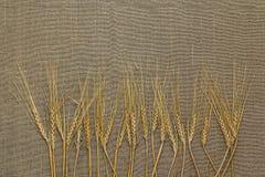 Несколько колосков пшеницы Стоковое фото RF
