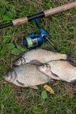 Несколько общих рыб леща, crucian рыбы, рыбы плотвы, суровые рыбы Стоковая Фотография RF