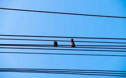 Несколько птицы голубя на проводе Стоковое Фото