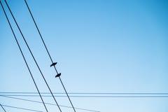 Несколько птицы голубя на проводе Стоковое Изображение RF