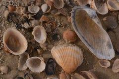 Несколько раковин моря на песчаном пляже Стоковое Изображение RF
