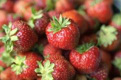 Несколько ярких красных зрелых ягод клубники Стоковые Фотографии RF