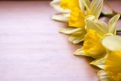 Несколько daffodils на деревянном столе Стоковое Фото