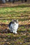 Несчастные коты живут на улицах, ища еда стоковые фото