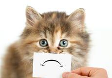 Несчастный или унылый изолированный кот Стоковая Фотография RF