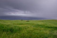 Несчастный травянистый холм Стоковые Изображения RF