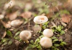 Несъедобный гриб в древесинах в природе Стоковая Фотография RF
