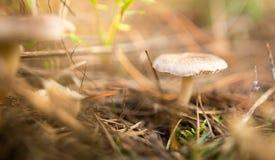 Несъедобный гриб в древесинах в природе Стоковые Изображения