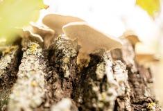 Несъедобный гриб в древесинах в природе Стоковые Фотографии RF