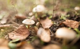 Несъедобный гриб в древесинах в природе Стоковое фото RF
