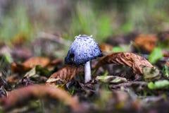 Несъедобный гриб растя в лесе во время осени Стоковое фото RF
