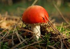 Несъедобный гриб Стоковое фото RF