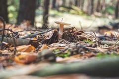 Несъедобный гриб растет белым в древесинах Стоковые Фото