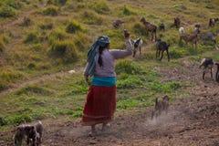 неторопливая жизнь nepalese Стоковое Фото