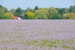 нет цветка 2 полей Стоковые Фото