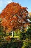 нет 15 листьев осеней Стоковые Фотографии RF