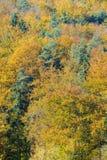 нет 3 листьев осеней Стоковая Фотография RF