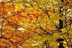 нет 9 листьев осеней Стоковое Фото
