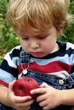 неудача яблока Стоковые Изображения RF
