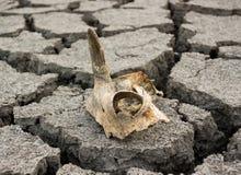 неурожайная земля Стоковое Изображение RF