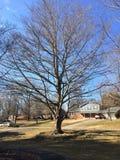 Неурожайное дерево зимы в дворе перед входом дома Северной Каролины Стоковое Изображение