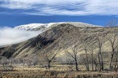 Неурожайные деревья и горы в Вашингтоне стоковая фотография rf