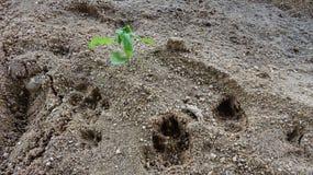 Неурожайные пески растут упорная жизнь стоковые фотографии rf