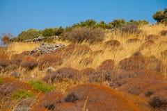 неурожайный ландшафт Стоковое Изображение RF