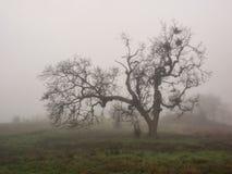Неурожайный дуб в тумане зимы Стоковые Фото
