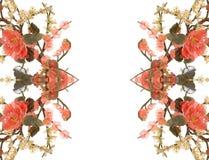нефрит вишни 20 цветений Стоковое фото RF