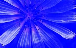 Нецентральные голубые лепестки цветка Стоковые Фото