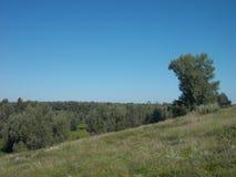 Нечестное дерево на скале Стоковое Изображение RF