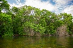 Нечестные согнутые деревья и кусты на речном береге с голубым небом на предпосылке Стоковые Изображения