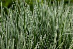 Нечетная острая трава около пруда стоковое изображение