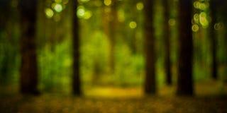 Неясное изображение загадочного золотого светлого glade в лесе Стоковое Изображение RF