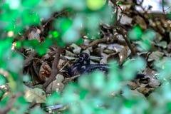 Неясные изображения путем фокусировать на голубях стоковое изображение rf