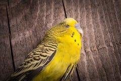 Не значат, что проарретированы некоторые птицы стоковые фото
