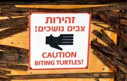 Не подайте черепахи! Стоковое Изображение RF