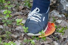 Не разрушьте красные пластинчатые грибы мухы стоковые изображения