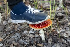 Не разрушьте красные пластинчатые грибы мухы стоковая фотография rf